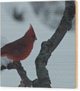 Male Cardinal Wood Print