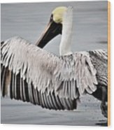 Pelican Take Off Wood Print