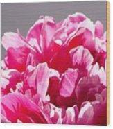 Peony Flower Wood Print