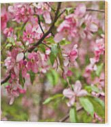 Pink Cherry Tree Wood Print