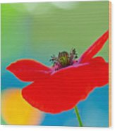 Poppy Wood Print by Silke Magino