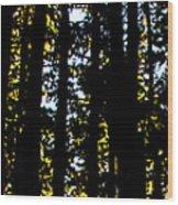 Salt Creek Falls Wood Print