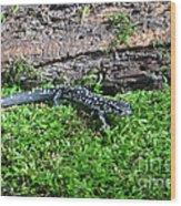 Slimy Salamander Wood Print