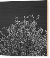 Treetop Wood Print