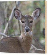 White Tailed Deer Smithtown New York Wood Print