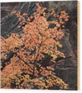 Zion Autumn Foliage Wood Print