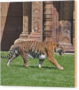 61- Sumatran Tiger Wood Print