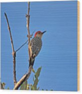 62- Red-bellied Woodpecker  Wood Print
