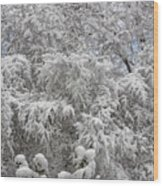 Snow And Branches Wood Print