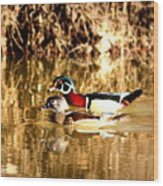 6980 - Wood Duck Wood Print