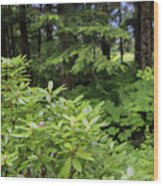Alaska_00007 Wood Print