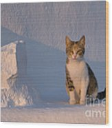 Cat On A Greek Island Wood Print
