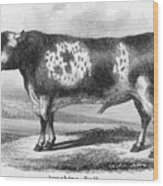 Cattle, 19th Century Wood Print