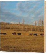 Cows Wood Print