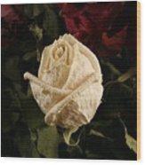 Dried Roses Wood Print