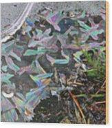 7. Ice Prismatics And Heather, Slaley Sand Quarry Wood Print