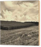 Iowa Cornfield Wood Print