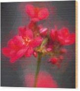 Jatropha Blossoms Painted Wood Print