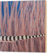 Malaysia, Marine Life Wood Print