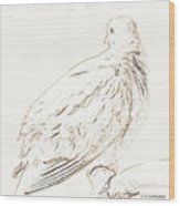 Mourning Dove, Animal Portrait Wood Print