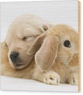 Rabbit And Puppy Wood Print