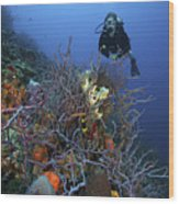 Scuba Diver Swims Underwater Amongst Wood Print by Terry Moore