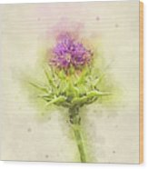 Silybum Eburneum Milk Thistle Wood Print