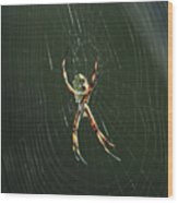 Spider On A Web Wood Print