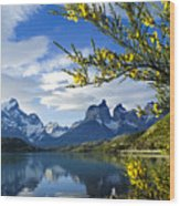 Springtime in Torres del Paine Wood Print