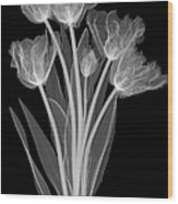 Tulips, X-ray Wood Print