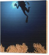 Underwater Photography Wood Print