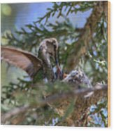 7311 Tilted Nest Feeding Wood Print