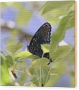 7759 - Butterfly Wood Print