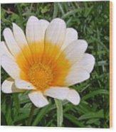 Australia - White Yellow Daisy Flower Wood Print
