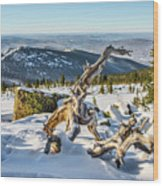 Amazing Winter Landscape With Frozen Snow-covered Trees On Mountains In Sunny Morning  Wood Print
