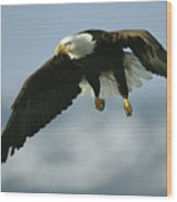 An American Bald Eagle In Flight Wood Print