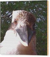 Australia - Kookaburra Stickybeak Wood Print