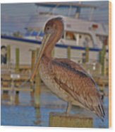 8- Brown Pelican Wood Print