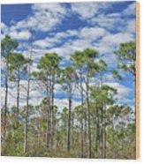8- Cypress Sky Wood Print