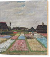 Flower Beds In Holland Wood Print