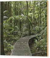 Forest Boardwalk Wood Print
