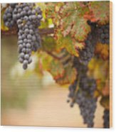 Grapes On The Vine Wood Print by Andy Dean