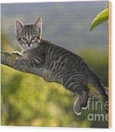 Kitten In A Tree Wood Print