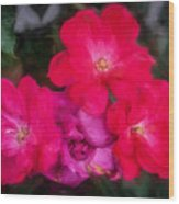 Knockout Roses Painted  Wood Print