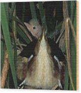 Least Bitterns On Nest Wood Print