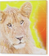 lioness Masai Mara, Kenya Wood Print