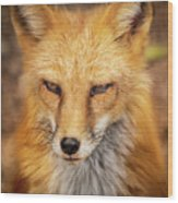 Russian Red Fox Wood Print