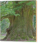 800 Years Old Oak Tree  Wood Print by Heiko Koehrer-Wagner