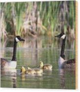 8132 - Canada Goose Wood Print