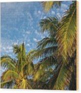 8167- Palm Tree Wood Print